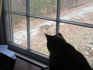 Deer and Cat